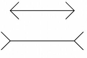 1-ミュラーリヤーの矢羽